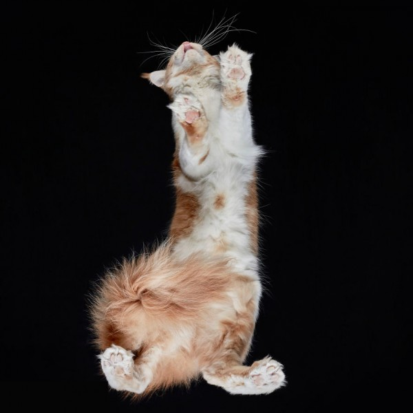 25-photos-of-cats-taken-from-underneath-22__880