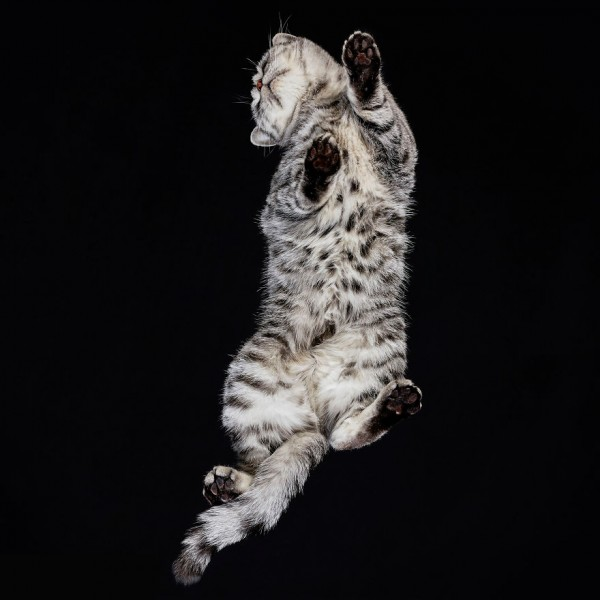 25-photos-of-cats-taken-from-underneath-24__880