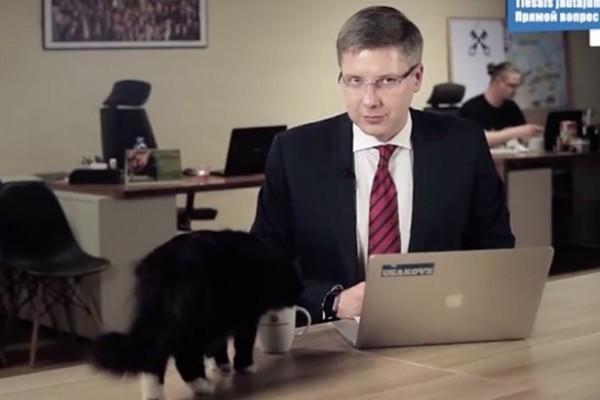 PAY-Cat-interrupts-live-news-broadcast