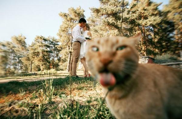 Olur Olmadık Yerlerde Fotoğraflarda Çıkan 31 Muazzam Kedi