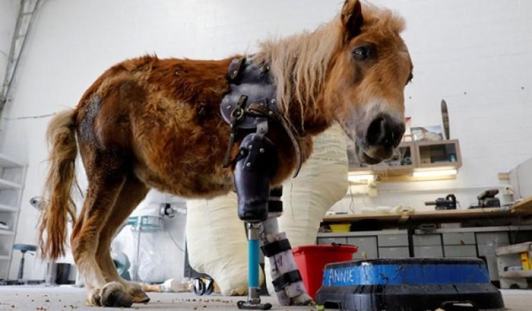 Trajik Bir Kazayla Bacağını Kaybeden Midillinin En Mutlu Günü