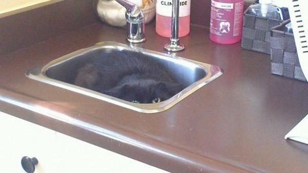 ninja-cat-hiding-funny-54__605