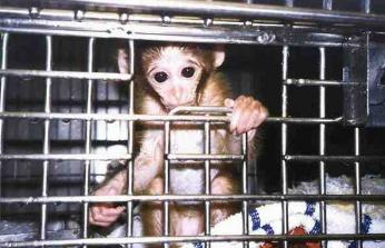 primateexperiment