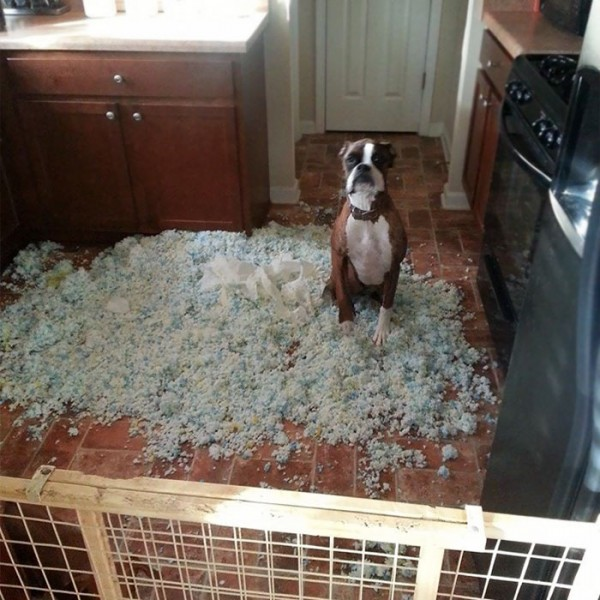 share-the-mess-your-pets-made-when-you-left-them-alone-101-58e63c0f94cec__700