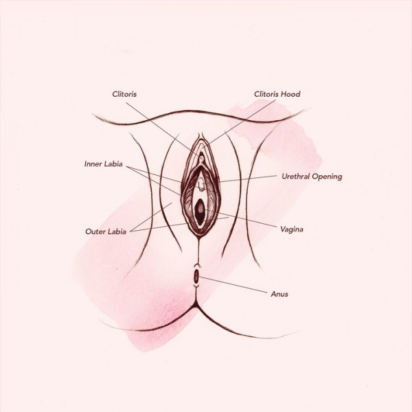 vagina-anatomy-outer