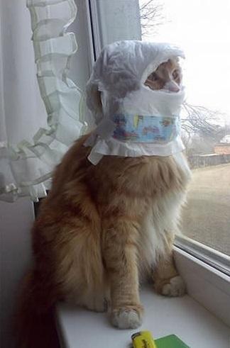 Yaramaz Kedi