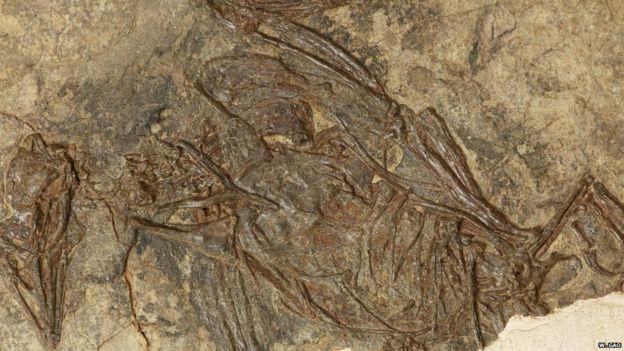 Kuşların Uçmasının Evrimsel Kökeni Fosil