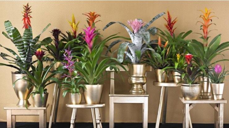 10 Plantes DIntrieur Faciles Entretenir Et