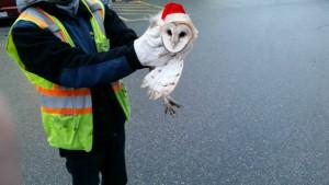 Owl resized