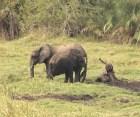 Elephant family mud bath