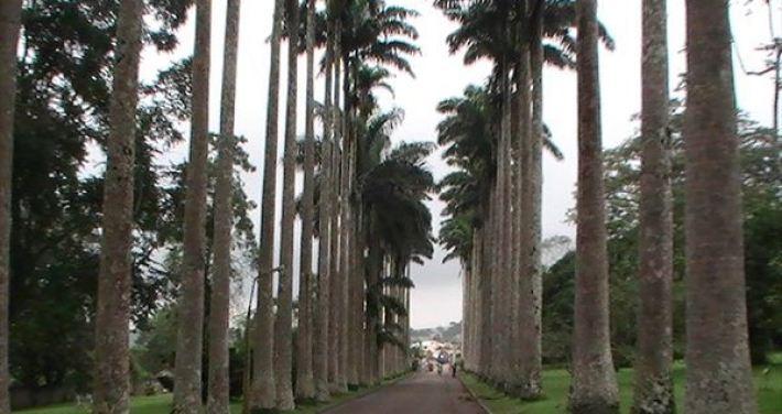 Ghana Highland