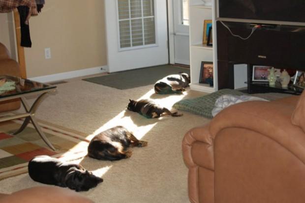日光が好きなネコ