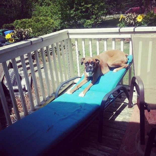 日光が好きな犬