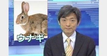 ウナギウサギ