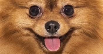笑える犬のイタズラ動画