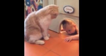 赤ちゃんの侵入を阻止するネコ