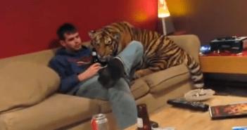 トラって大きい猫なんじゃないの