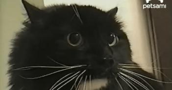 めちゃくちゃ怒っているネコ