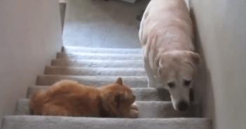 ネコを怖がる犬
