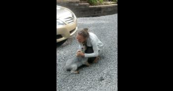感動のあまり失神する犬