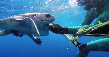 ウミガメ救出