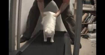 運動不足の猫をルームランナーに乗せてみた