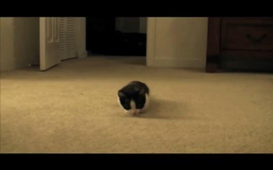ネコが飛びついてくる動画