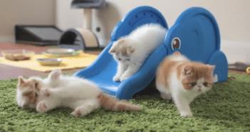 すべり台で遊ぶ子猫
