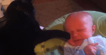 静かなる肉球で赤ちゃんを鎮めるネコ