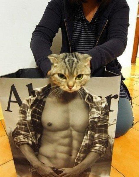 ネコとアバクロの袋 (9)