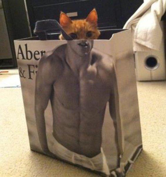 ネコとアバクロの袋 (3)
