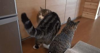 ネコのコント