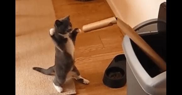 どう見てもボクサーなネコ