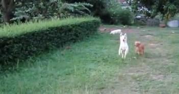 追いかけっこをする犬