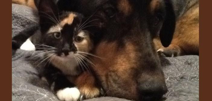 ガンで亡くなった犬といつも一緒にいたネコのストーリー