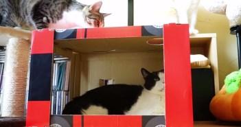 猫が箱の上を通ろうとした