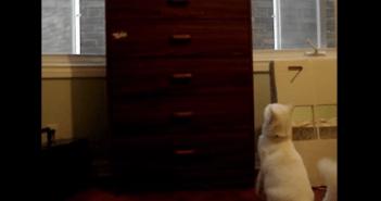 失敗を誤魔化す猫