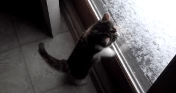 初めて雪を見た子猫