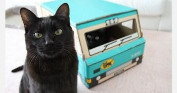 黒猫たちが路頭に迷っている