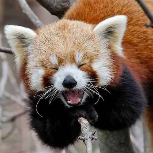 動物の大笑い (5)_R