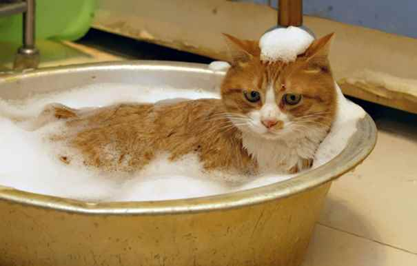 cat-loves-water-bath-23__605_R