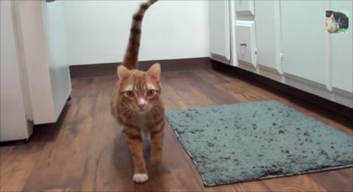 cat7_R