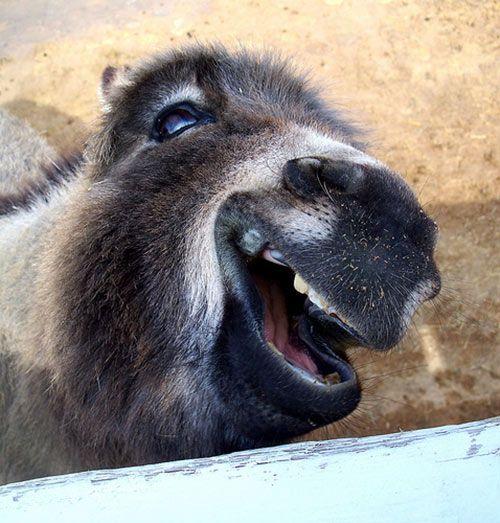 動物の大笑い (26)