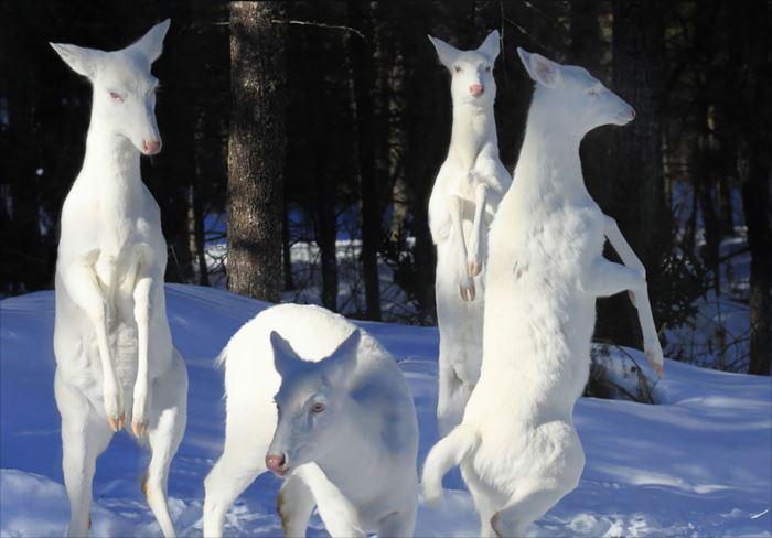 albino-animals-3-1__880_R