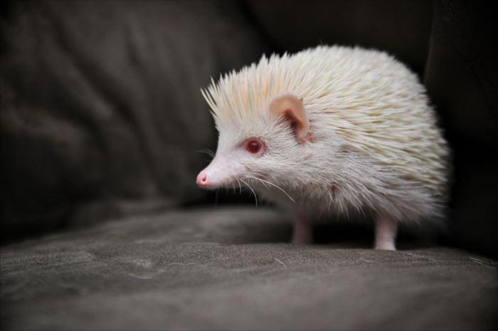 albino-animals-3-9__880_R