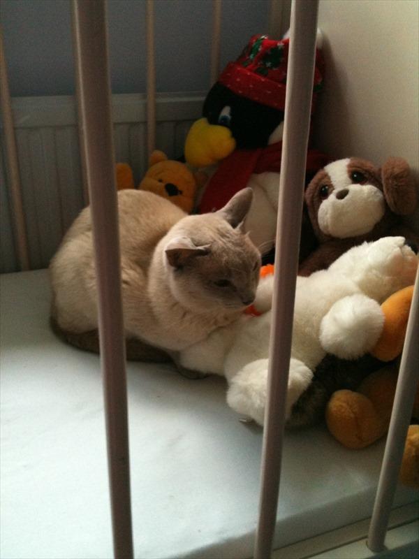 cat12_R