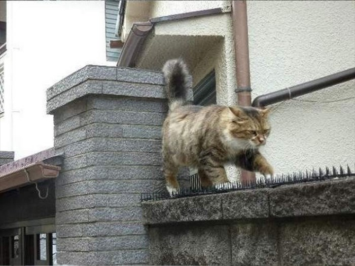 social-cat-2_R
