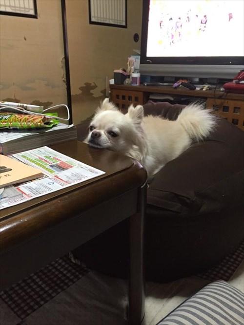dog1_R