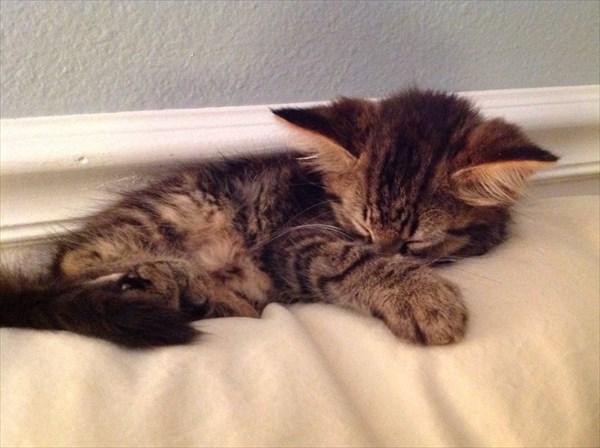 kitty (7)_R