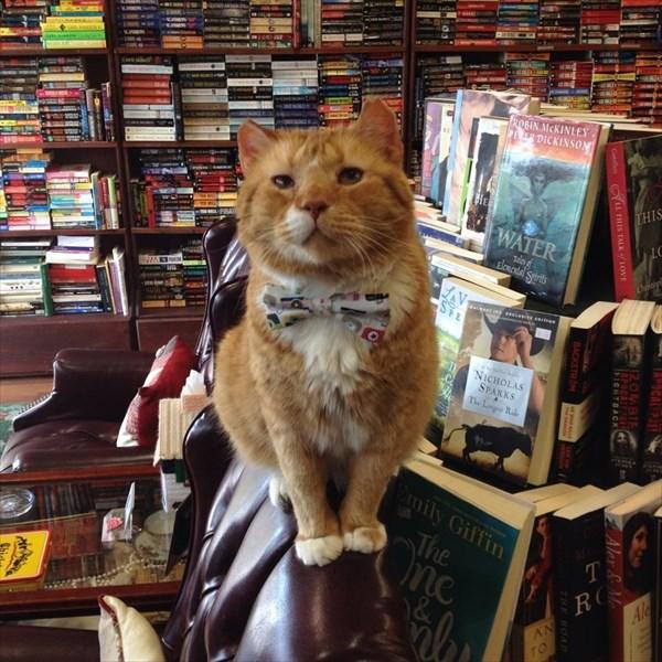 bookstore (2)_R